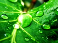 Green-Nature-Wallpaper-green-19511380-1920-1440